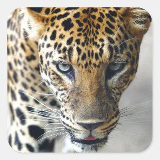 Leopardo manchado pegatina cuadrada
