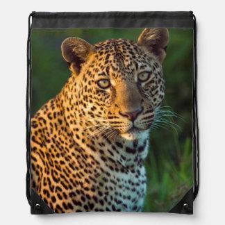 Leopardo masculino (Panthera Pardus) Cub maduro Mochilas