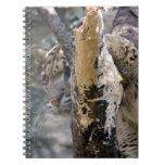 leopardo nublado 12 cuadernos