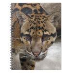 leopardo nublado 5 cuaderno