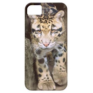 Leopardo nublado iPhone 5 fundas