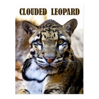 Leopardo nublado tarjeta postal
