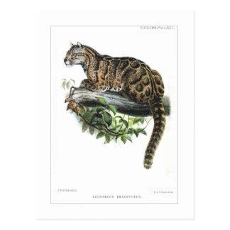 Leopardo nublado tarjetas postales
