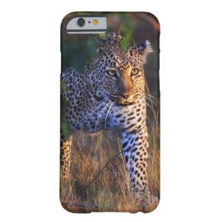 Leopardo Panthera Pardus como se ve en el Masai
