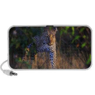 Leopardo (Panthera Pardus) como se ve en el Masai PC Altavoces