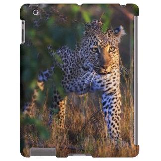 Leopardo (Panthera Pardus) como se ve en el Masai Funda Para iPad