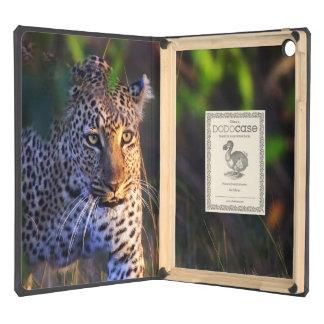 Leopardo (Panthera Pardus) como se ve en el Masai