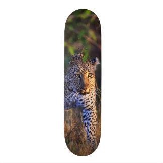 Leopardo (Panthera Pardus) como se ve en el Masai Tabla De Skate