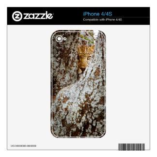 Leopardo (Panthera Pardus) que oculta detrás de Calcomanías Para iPhone 4S