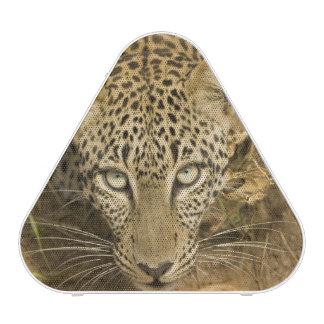 Leopardo, pardus del Panthera, bebiendo de a Altavoz