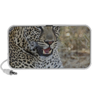 Leopardo, pardus del Panthera, juego de Samburu Sistema Altavoz