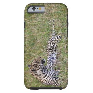 Leopardo pardus del Panthera que descansa en