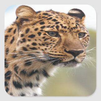 Leopardo Pegatina Cuadrada