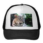 Leopardo persa raro gorras