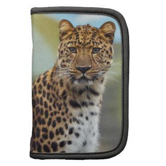 Leopardo Organizador