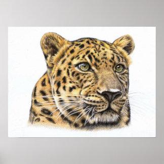 Leopardo Portrait Póster