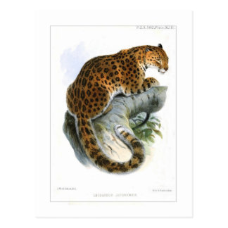 Leopardo Postales