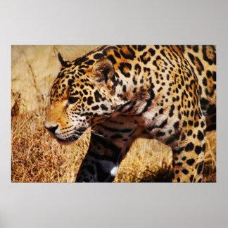 Leopardo Póster