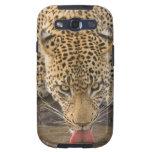 Leopardo que bebe, mayor parque nacional de Kruger Galaxy S3 Protectores