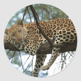 Leopardo que descansa en árbol pegatina redonda