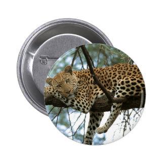 Leopardo que descansa en árbol pin