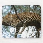 Leopardo que descansa en árbol alfombrilla de ratones