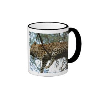 Leopardo que descansa en árbol tazas de café