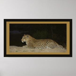 Leopardo que miente en el banco de la arena impresiones