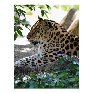 Leopardo que miente en roca membrete personalizado