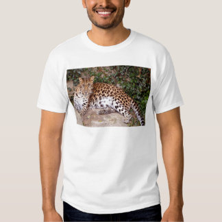 Leopardo que miente en roca playera