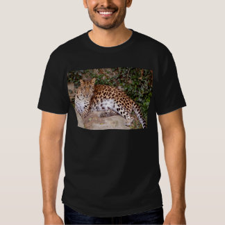 Leopardo que miente en roca remera