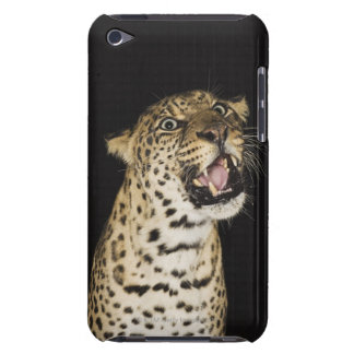 Leopardo que ruge barely there iPod protector