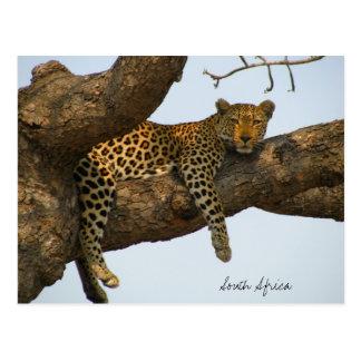 Leopardo que se sienta en un árbol tarjetas postales
