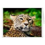 Leopardo Tarjetas