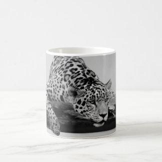 Leopardo Taza