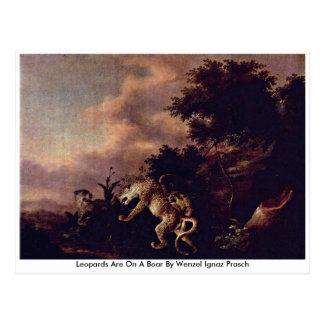 Leopards Are On A Boar By Wenzel Ignaz Prasch Postcard
