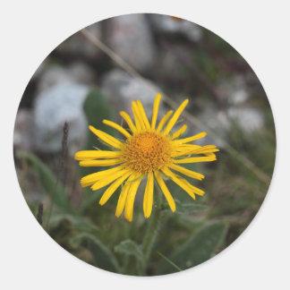 Leopards bane flower classic round sticker
