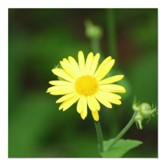 Leopards Bane Flowers  Invitations