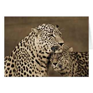Leopards Caring Card
