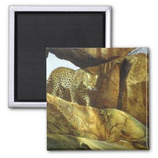 Leopards lair fridge magnet
