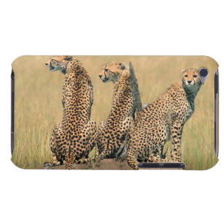 Leopards looking away iPod touch covers
