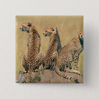 Leopards looking away pinback button