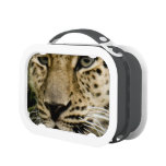 Leopards Lunchbox