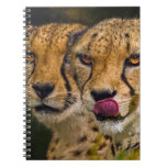 Leopards Notebook