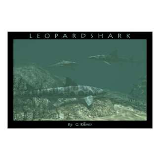 Leopardshark Print