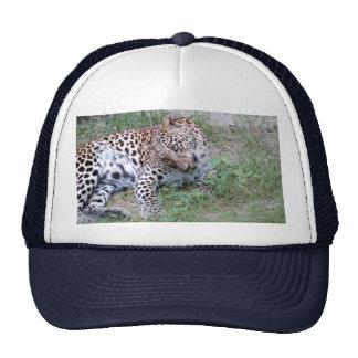 LeopardSundari_001 Trucker Hat