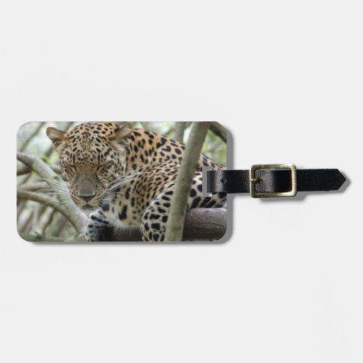 LeopardSundari_004 Etiquetas Maletas