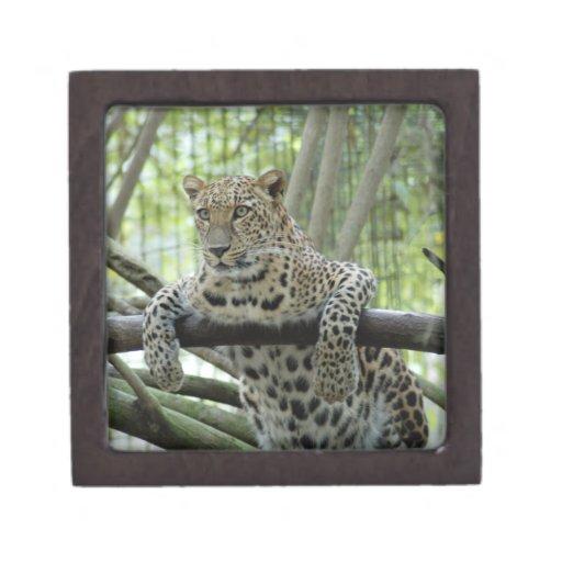 LeopardSundari_008 Cajas De Recuerdo De Calidad