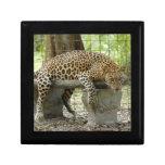 LeopardSundari_011 Caja De Recuerdo