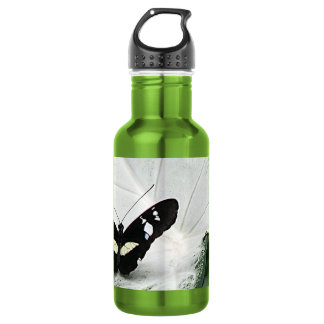 lepidopterist,butterfly,black,white,caladium,leaf, stainless steel water bottle